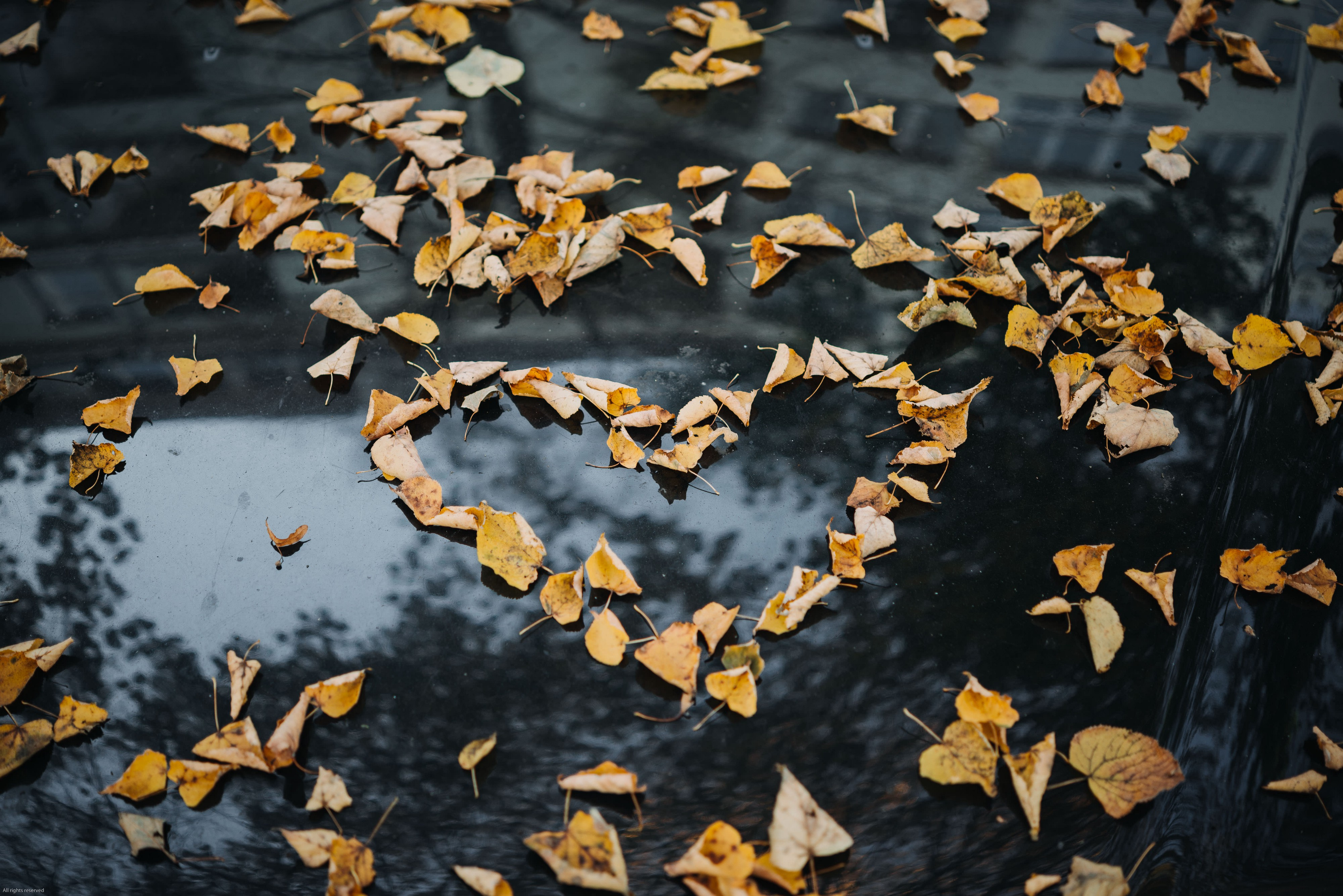 A love heart made from gold fallen autumn leaves in a puddle.