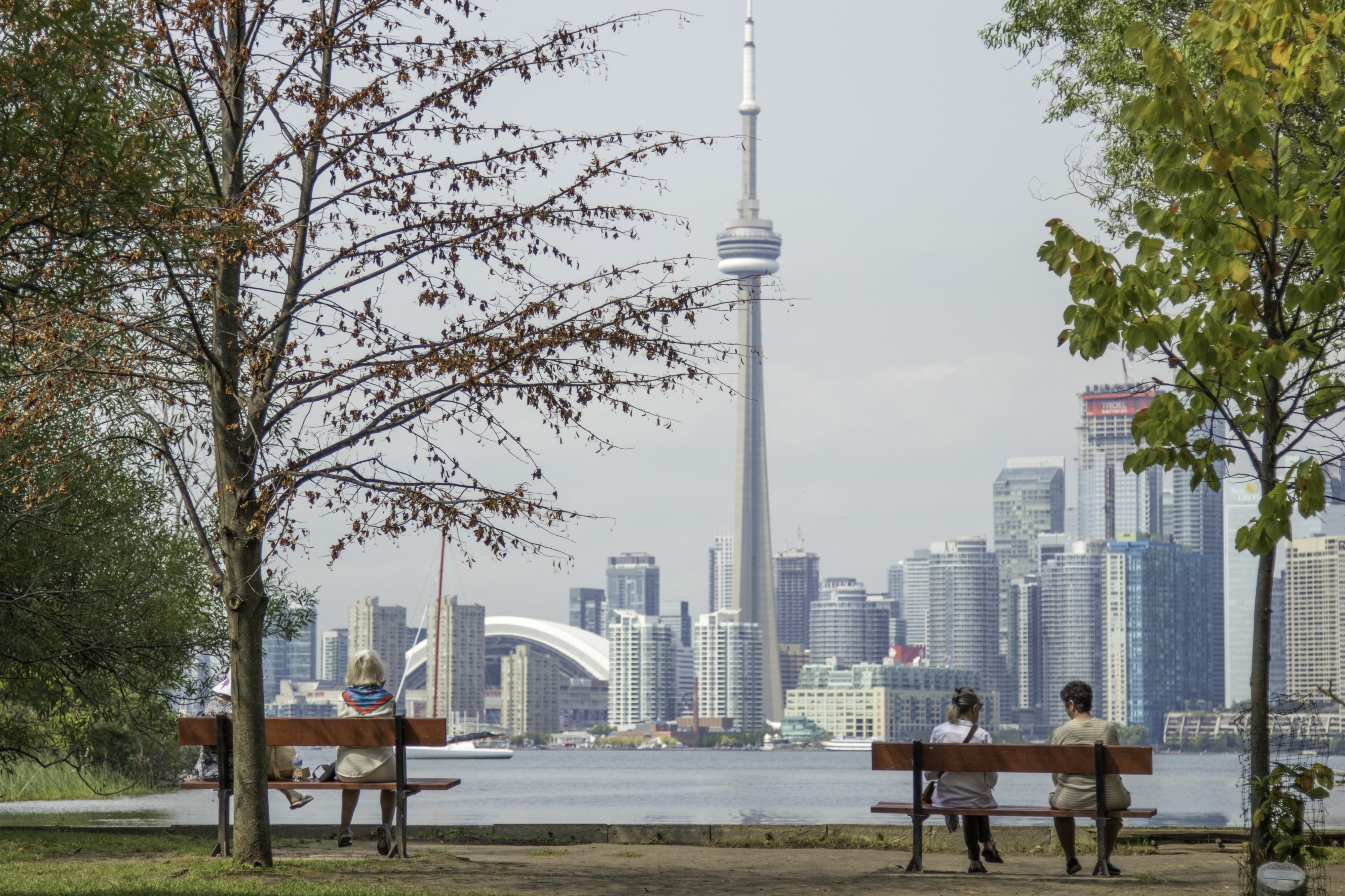 View of Toronto's downtown core from the vantage point of a park across a river.