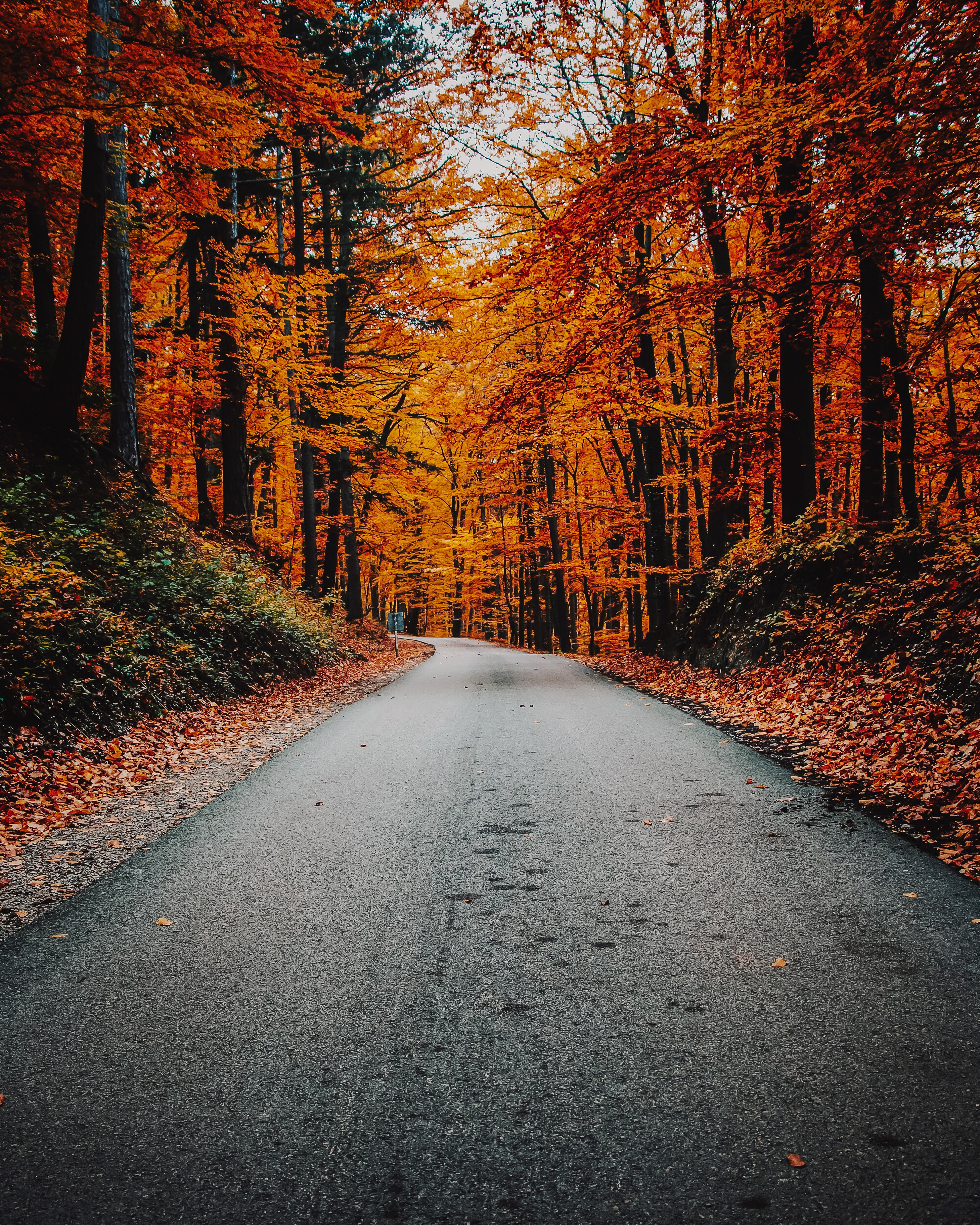 A paved road through bright orange trees in autumn.