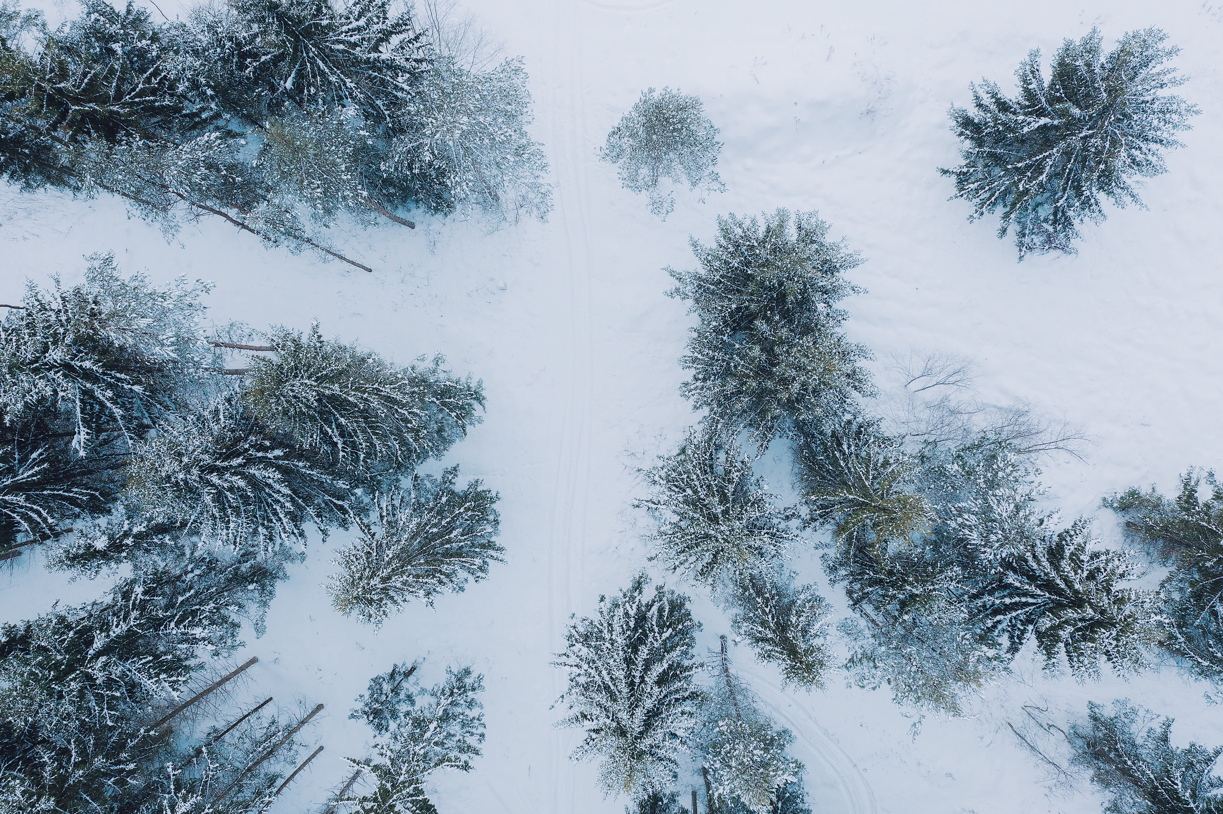 An aerial view of a forest in the winter time.