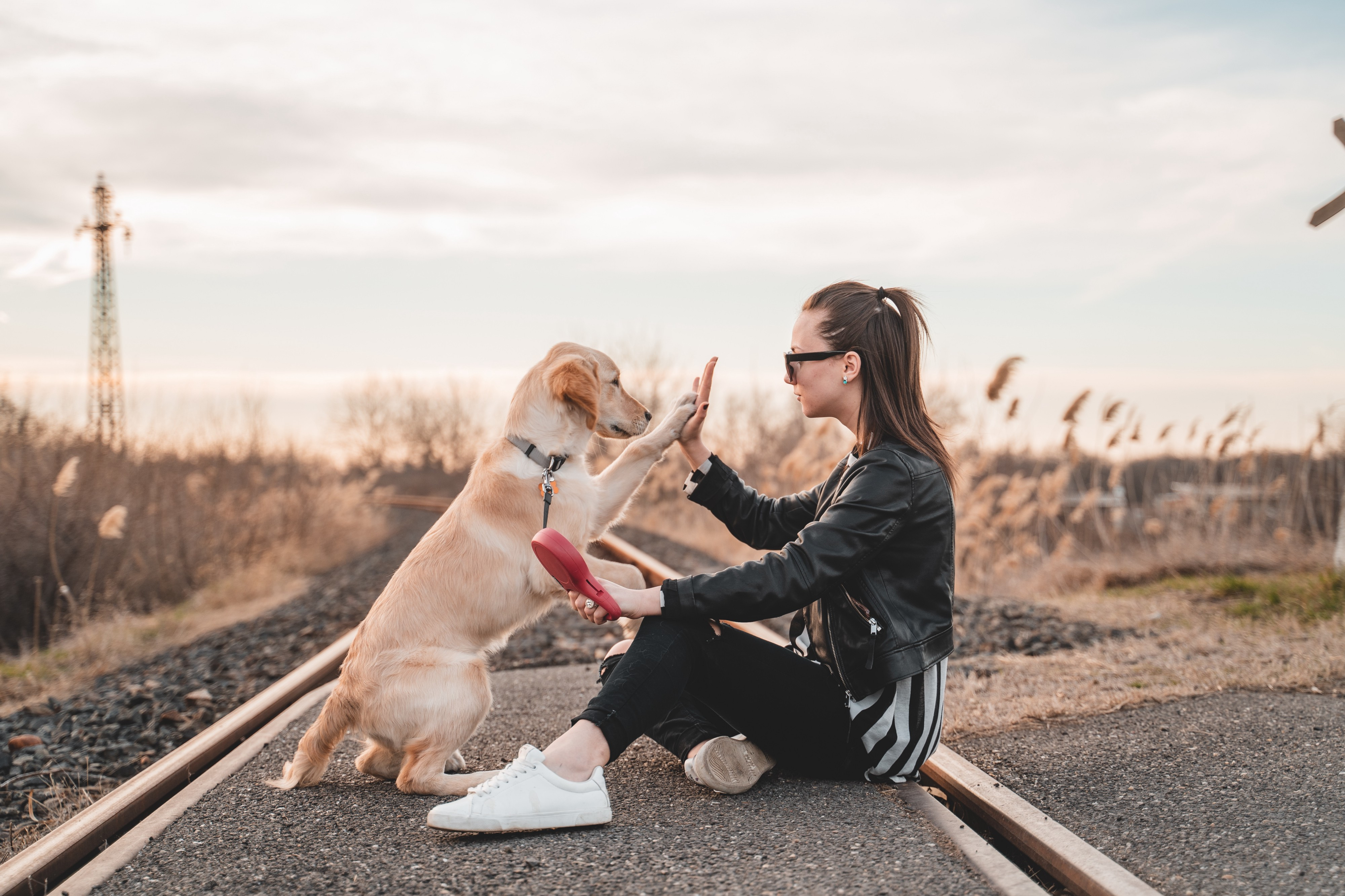 Dog high-fiving an owner
