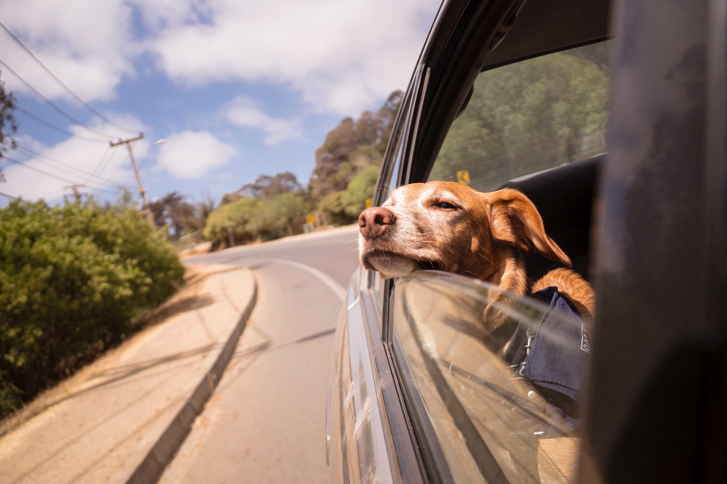 Dog lazily looking out a car window