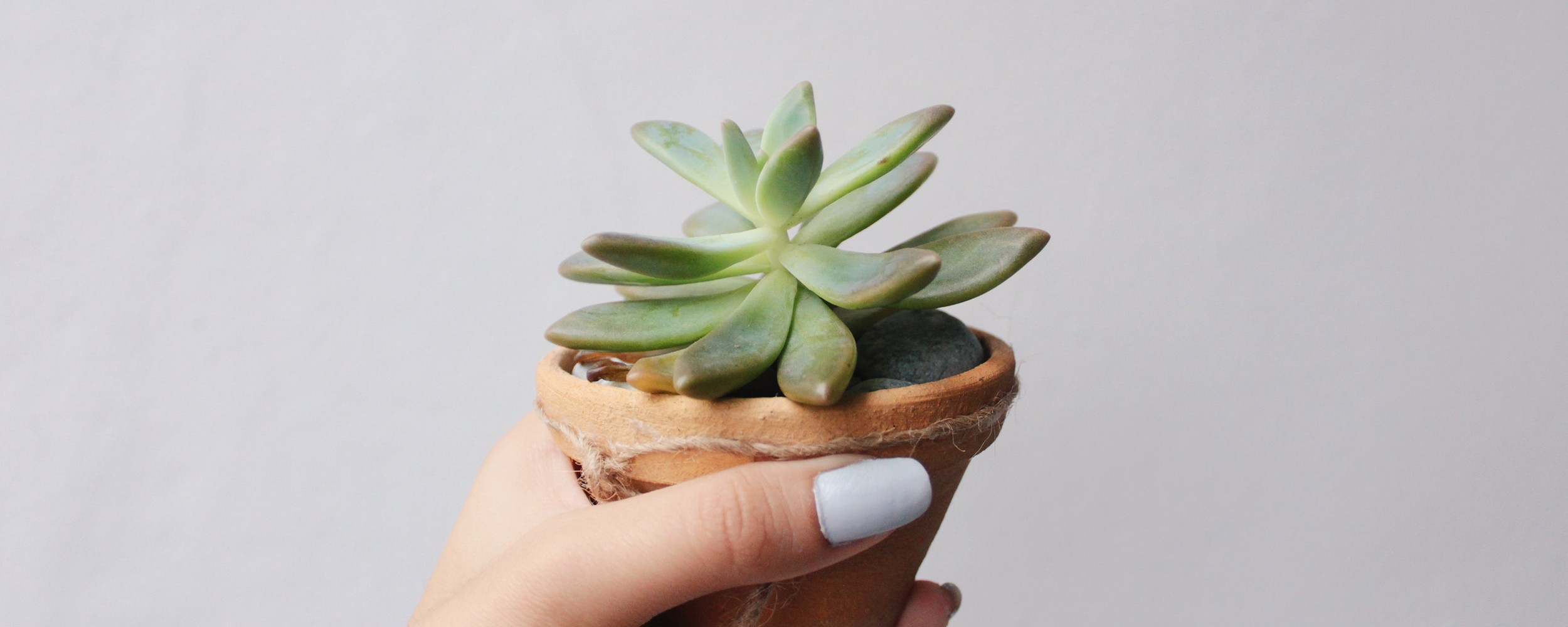 Hand holding a small, potted succulent
