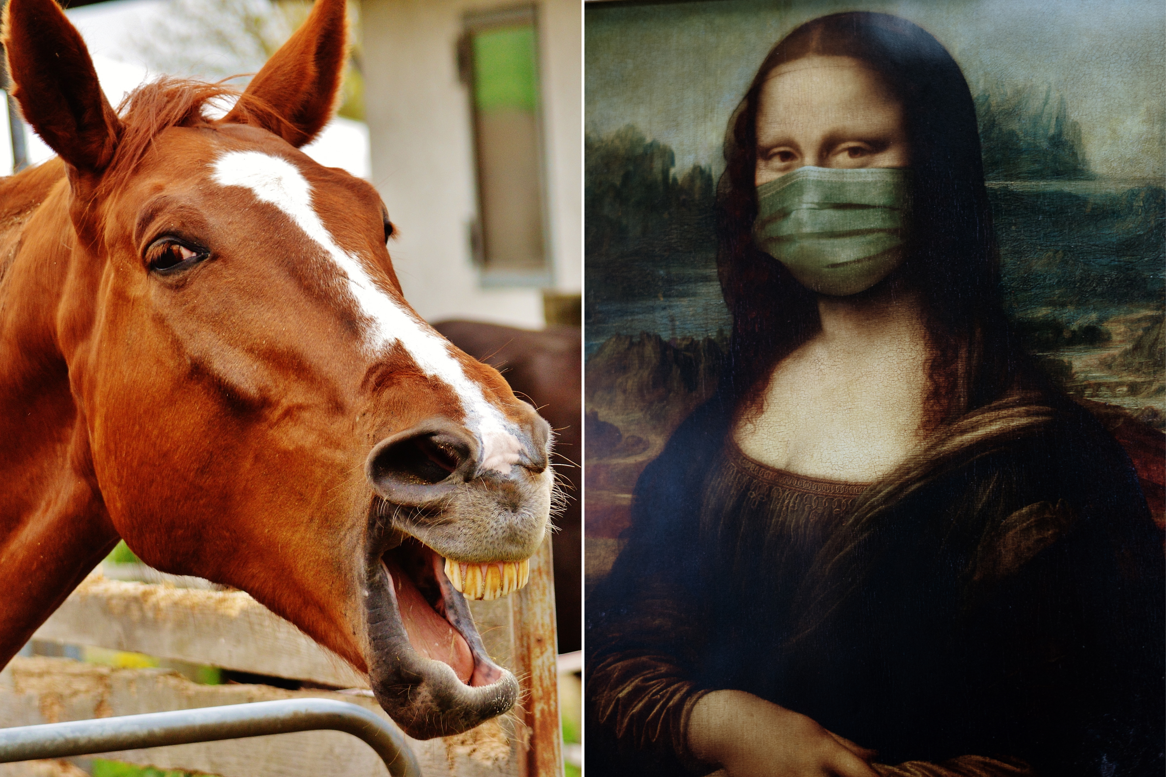 An mage of a laughing horse and Mona Lisa in a nose mask.