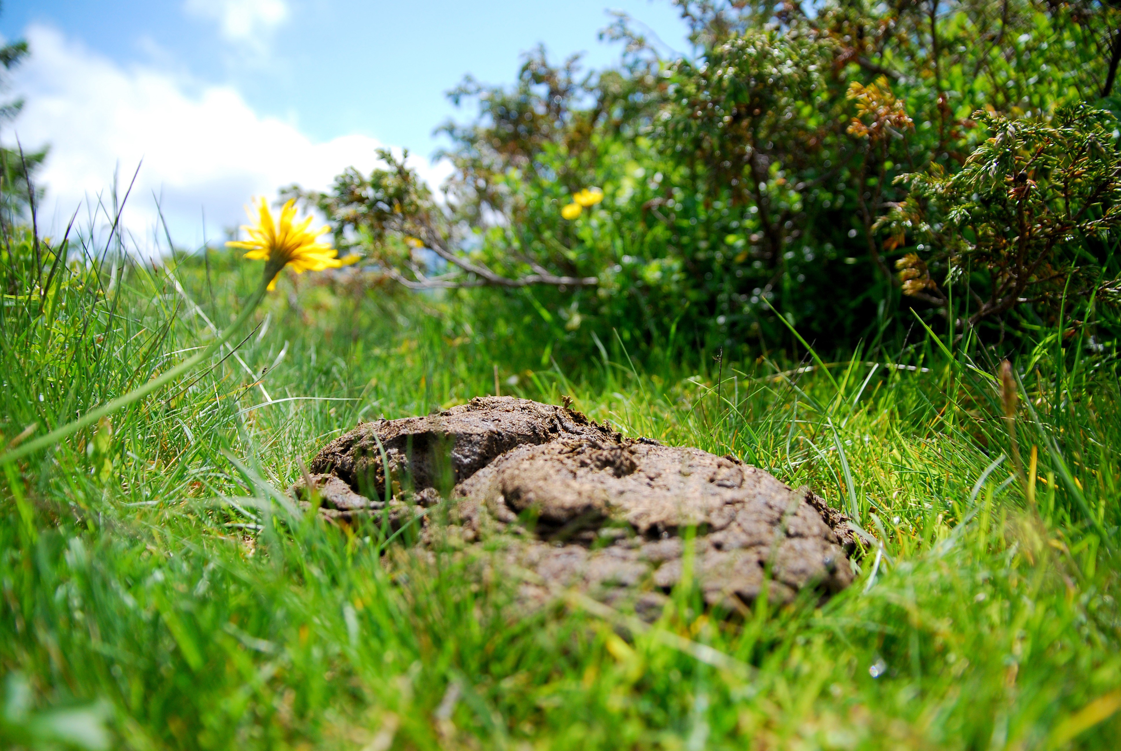 Stop and smell the poop - The Coffeelicious - Medium