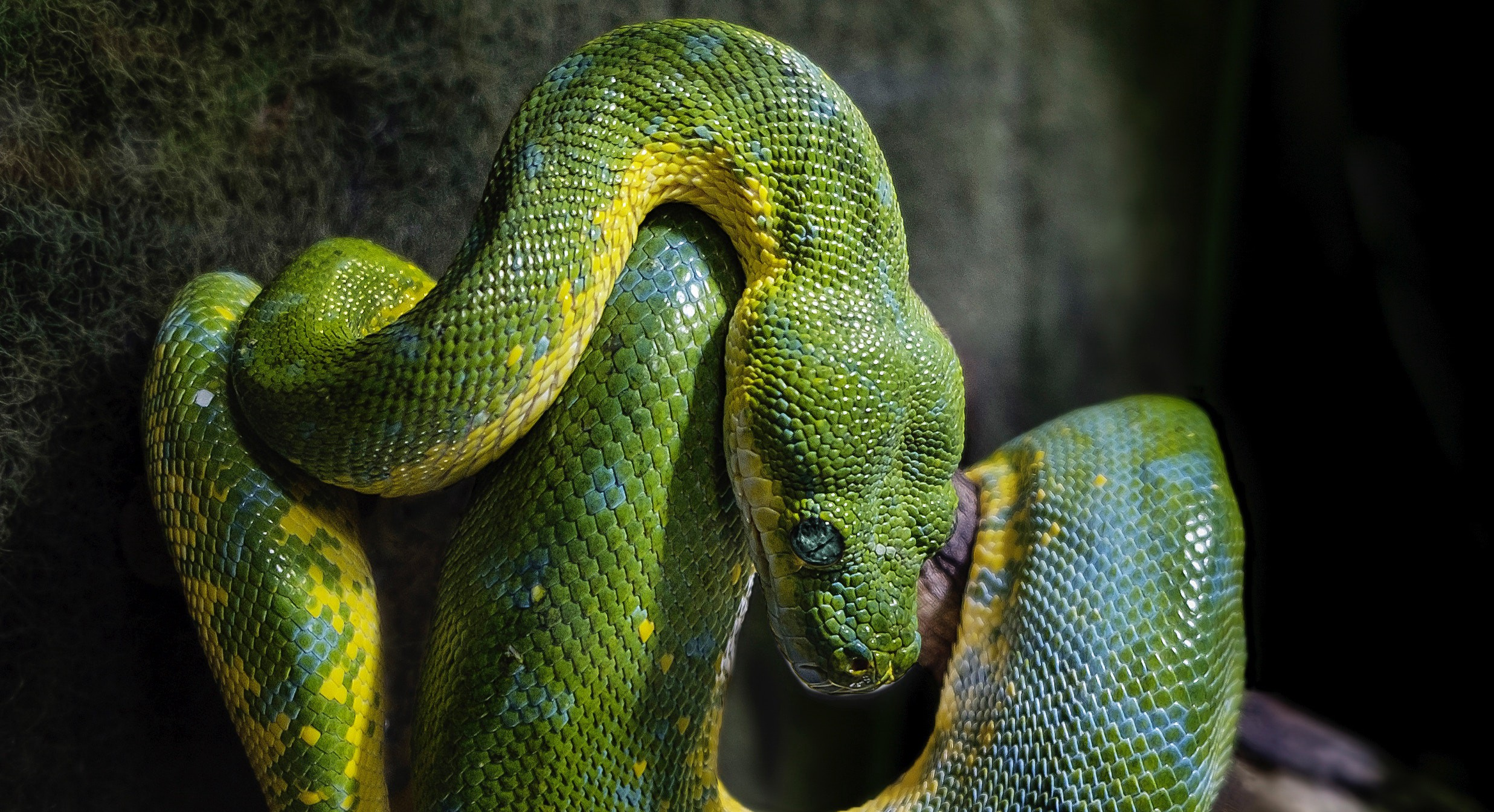 All the things I hate about Python - Nathan Murthy - Medium