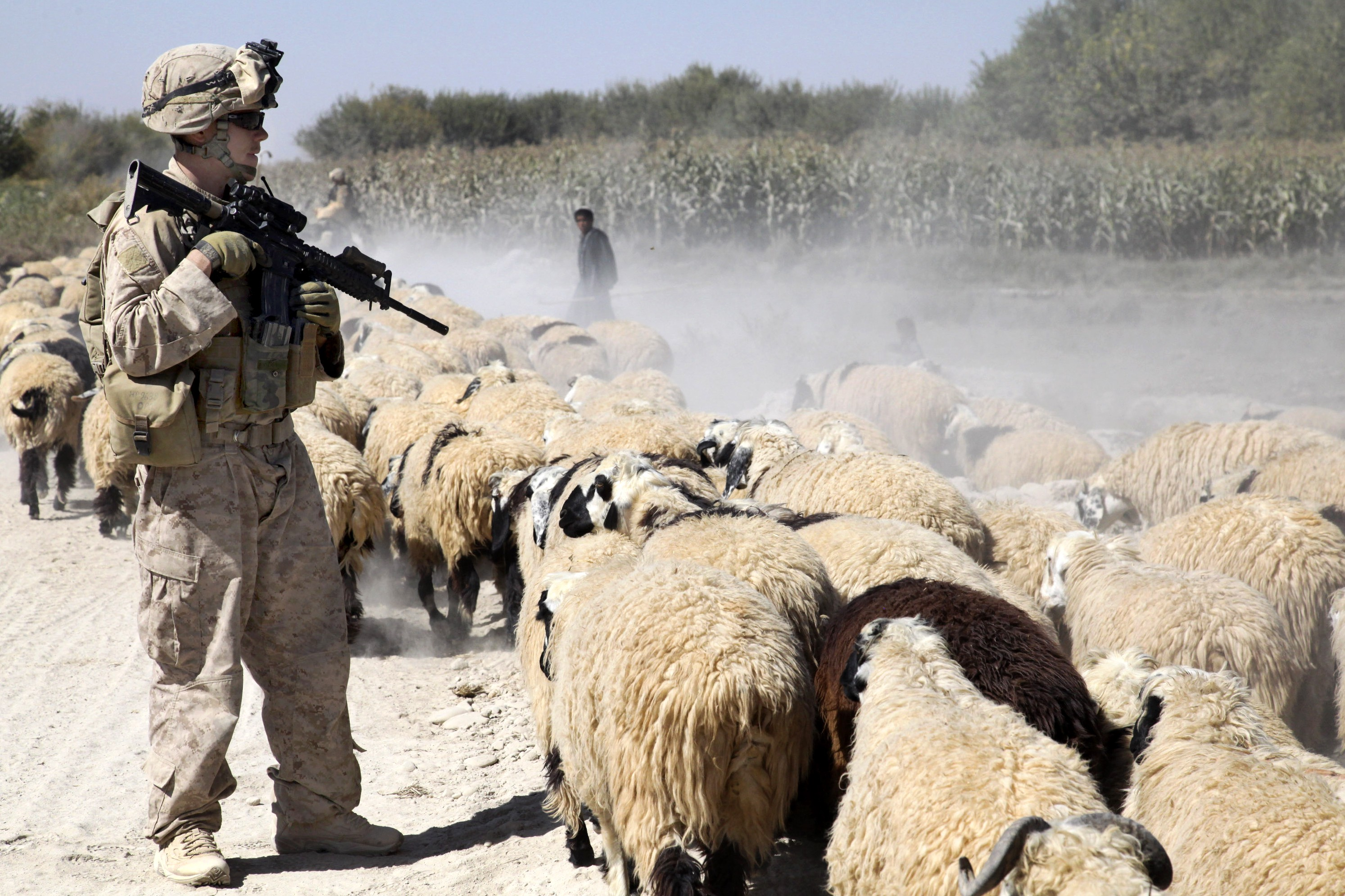 Afghanistan's Failed Goat Farm Is the Perfect American Disaster