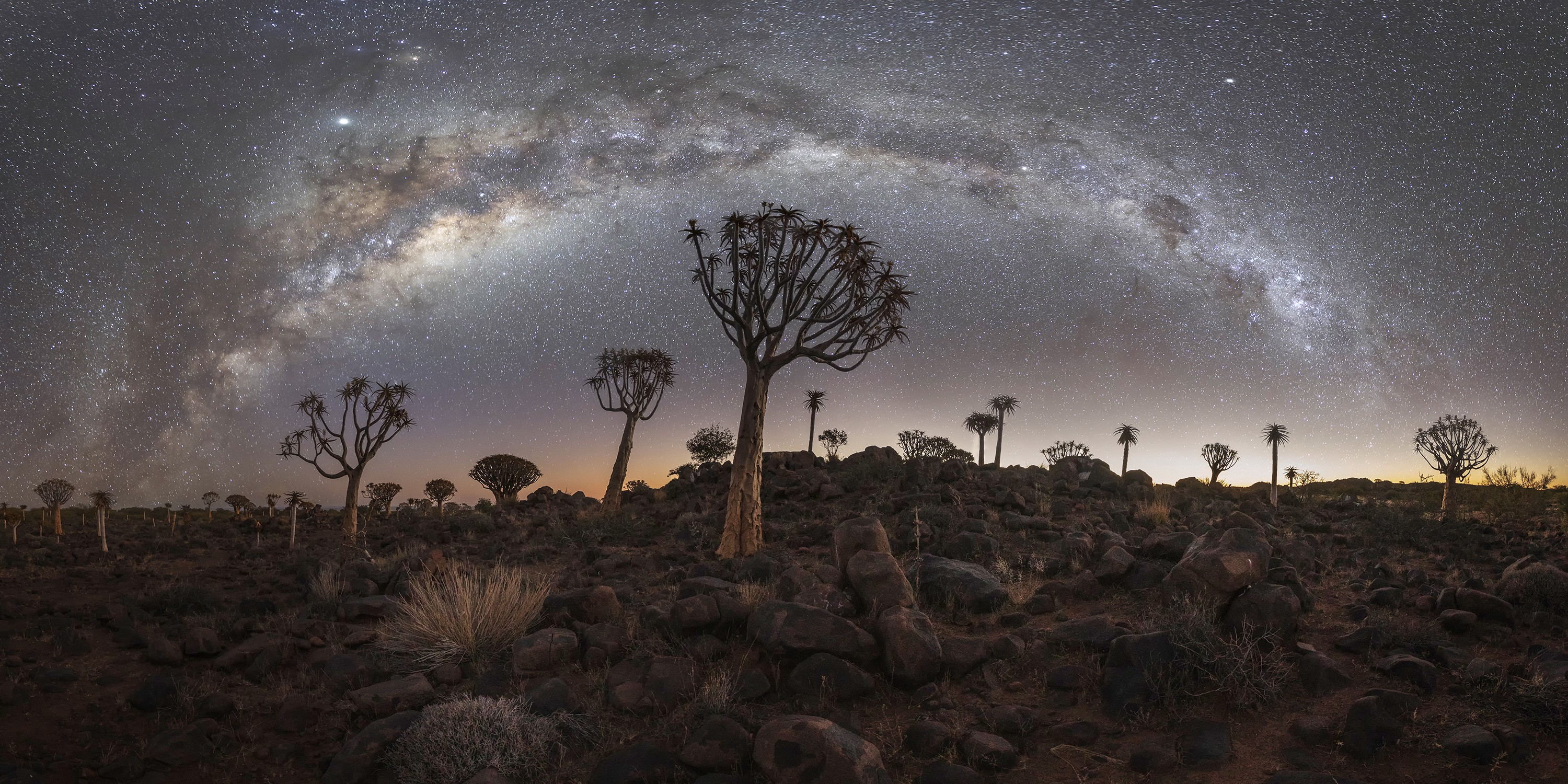 A fine art photograph of a starry sky and the silhouettes of beautiful and almost alien trees