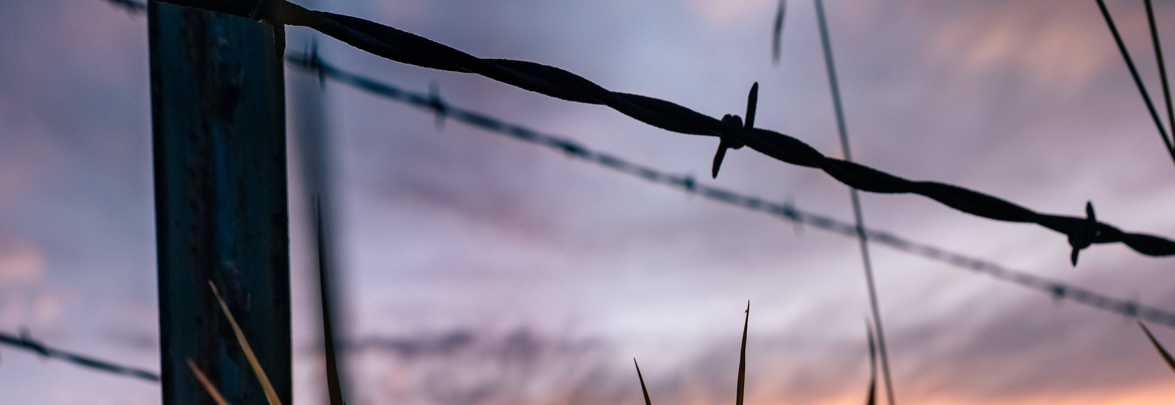 Barbed wired running across the sun-setting pastures.