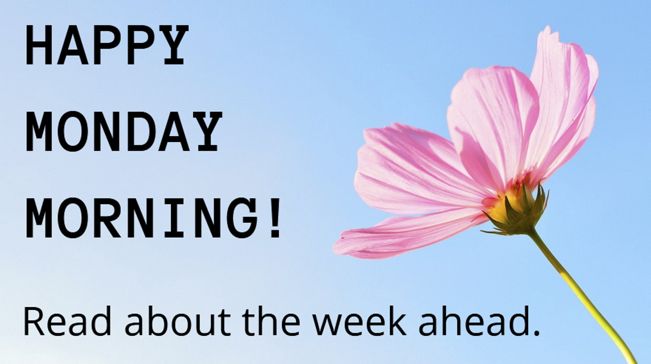 Pink flower on blue background and Monday Morning greeting
