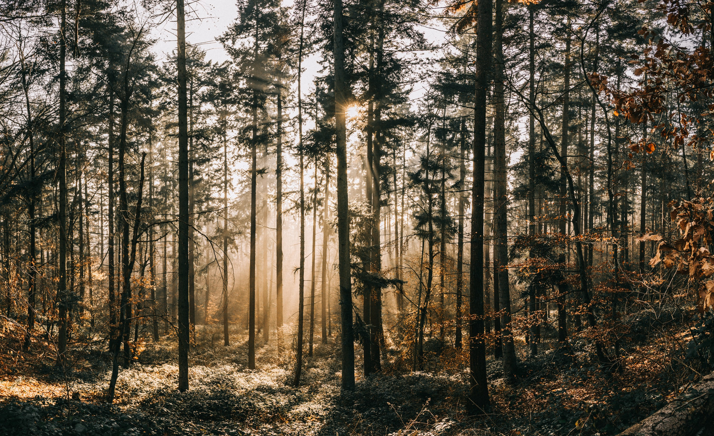 A forest with some sunlight in the back
