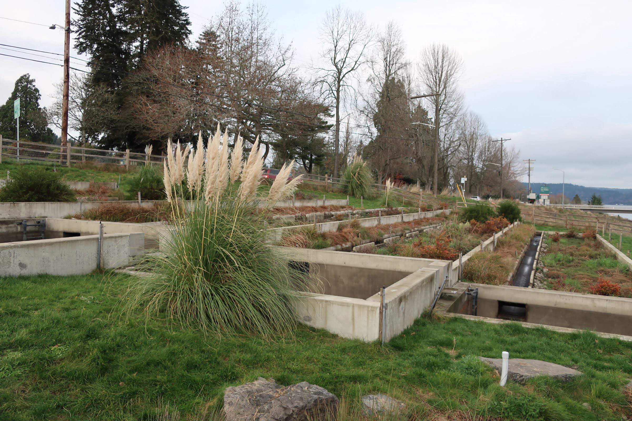 Photo of Tacoma's Point Defiance Regional Stormwater Treatment Facility, which has native plants and concrete holding areas