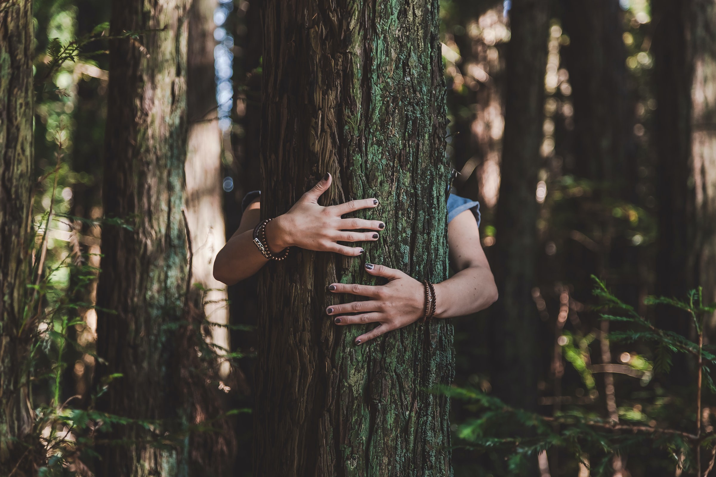 Person hugging tree — corporate social responsibility, sustainability, business, meditation, mindfulness, compassion, empathy