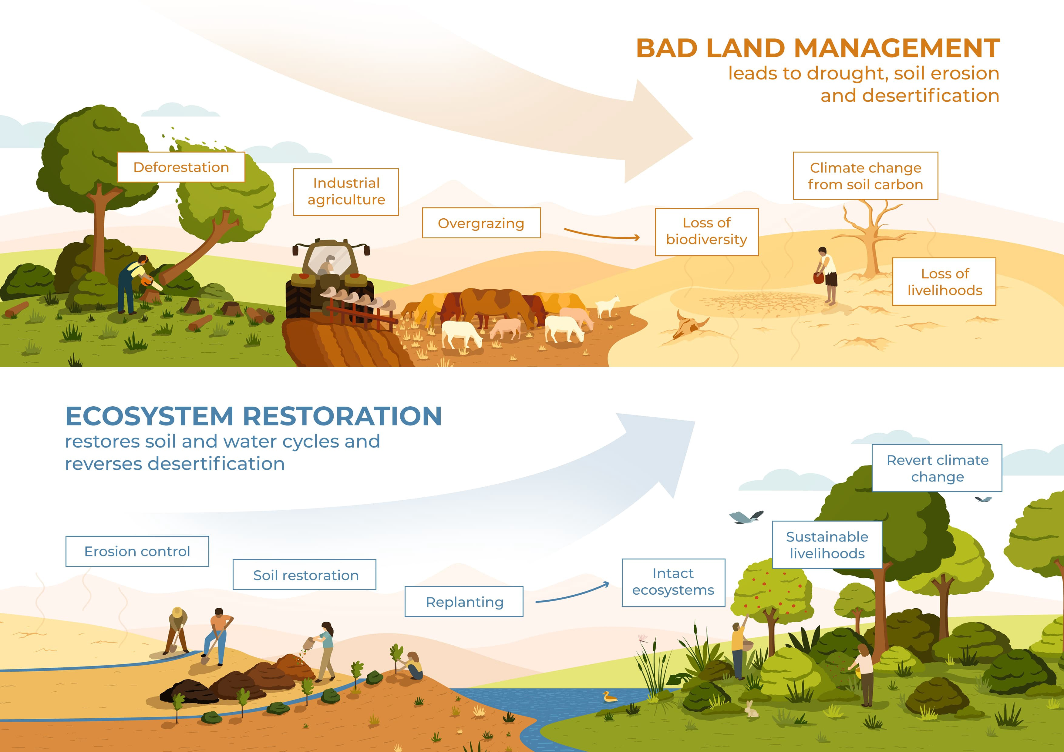 Making the most of the 'UN Decade on Ecosystems Restoration