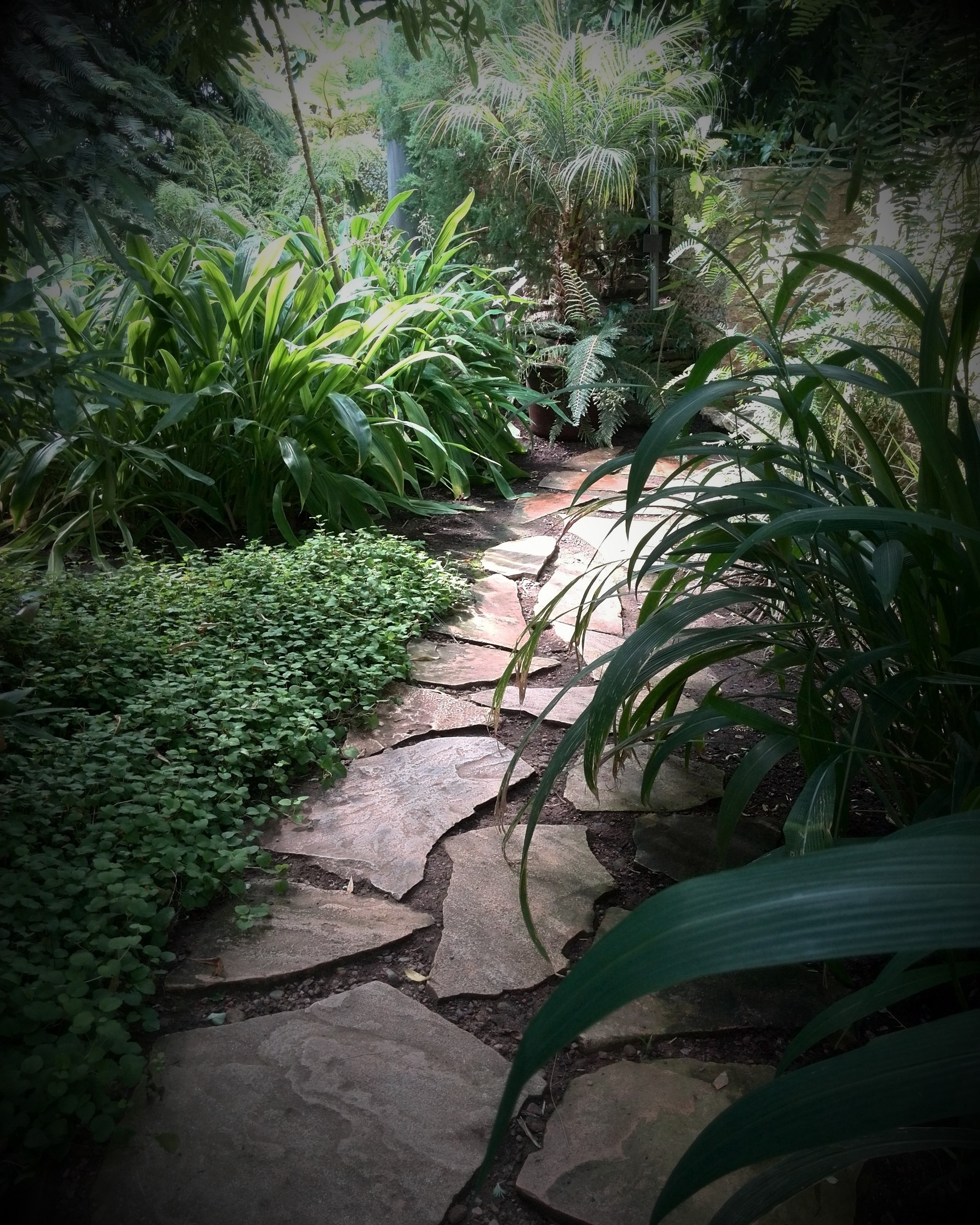 In the Pim's garden. In the backyard of a cozy cafe, the ...
