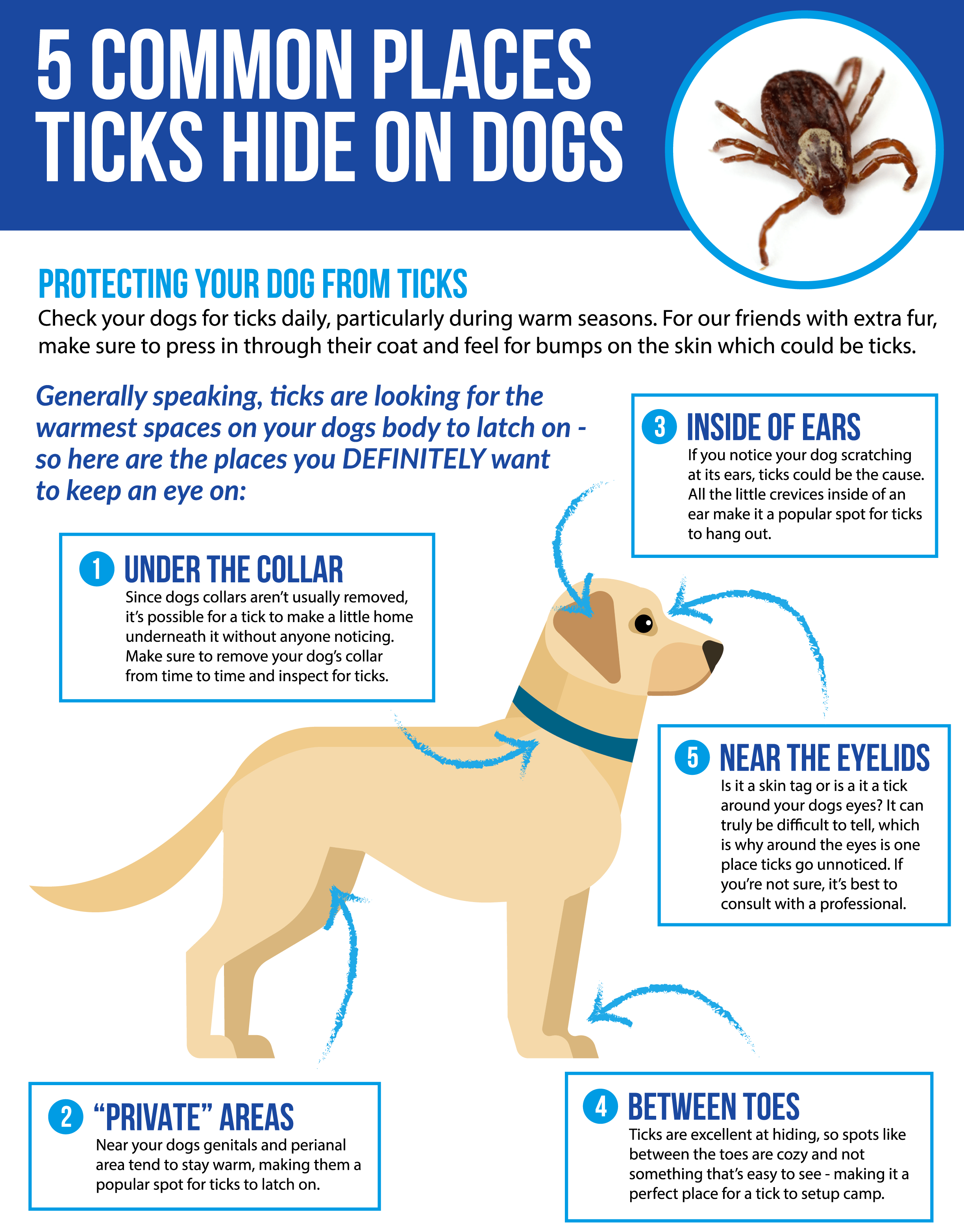 Does Your Dog Have Lyme Disease Lyme Disease In Dogs Is One Of The By Ahmed Abouleel Medium