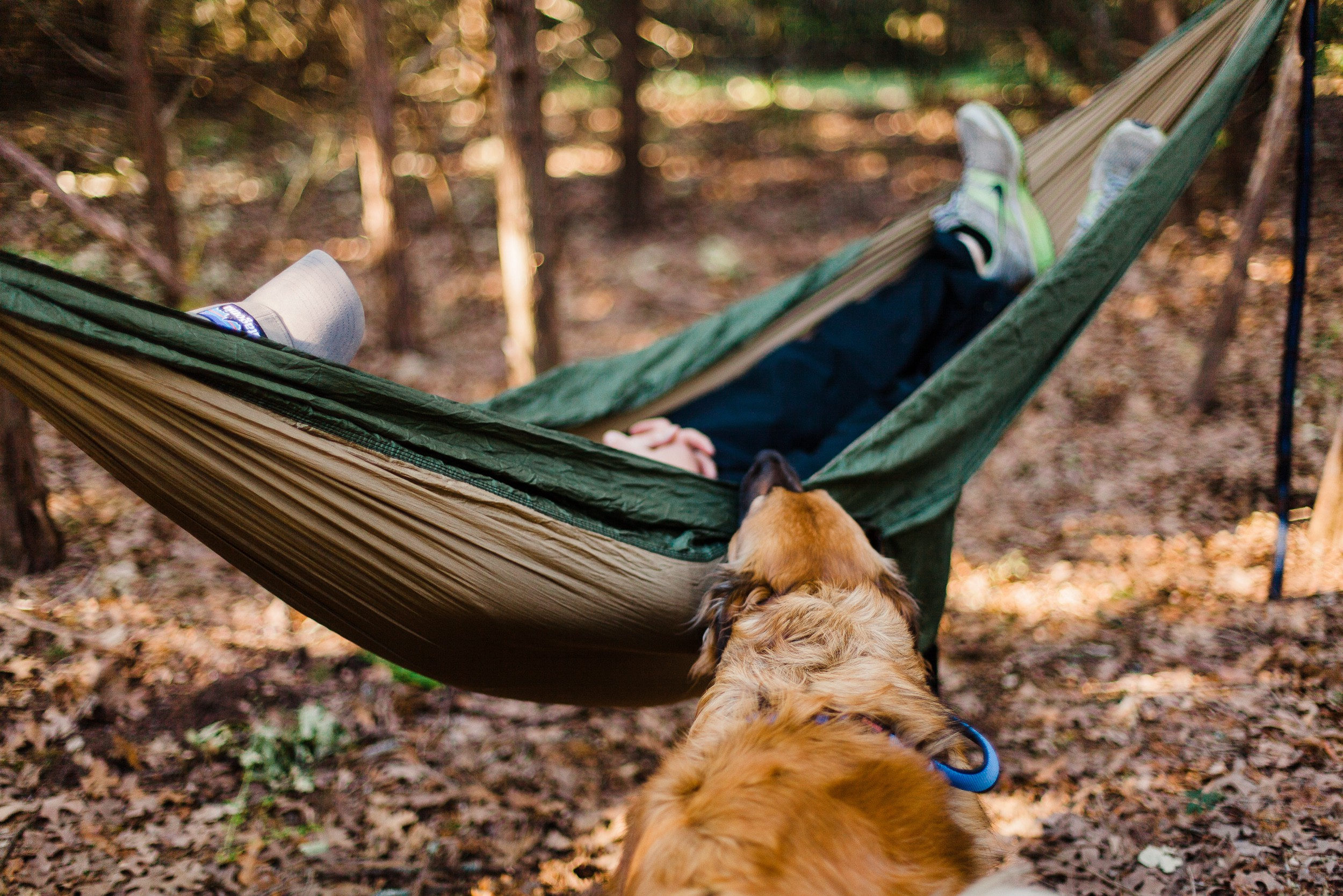 A person lays in a hammock in the forest with their golden retriever