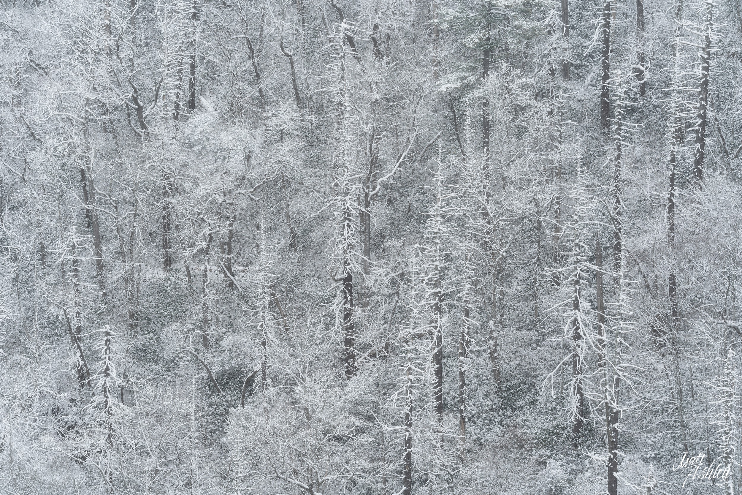 Abstract image of snow covered trees.
