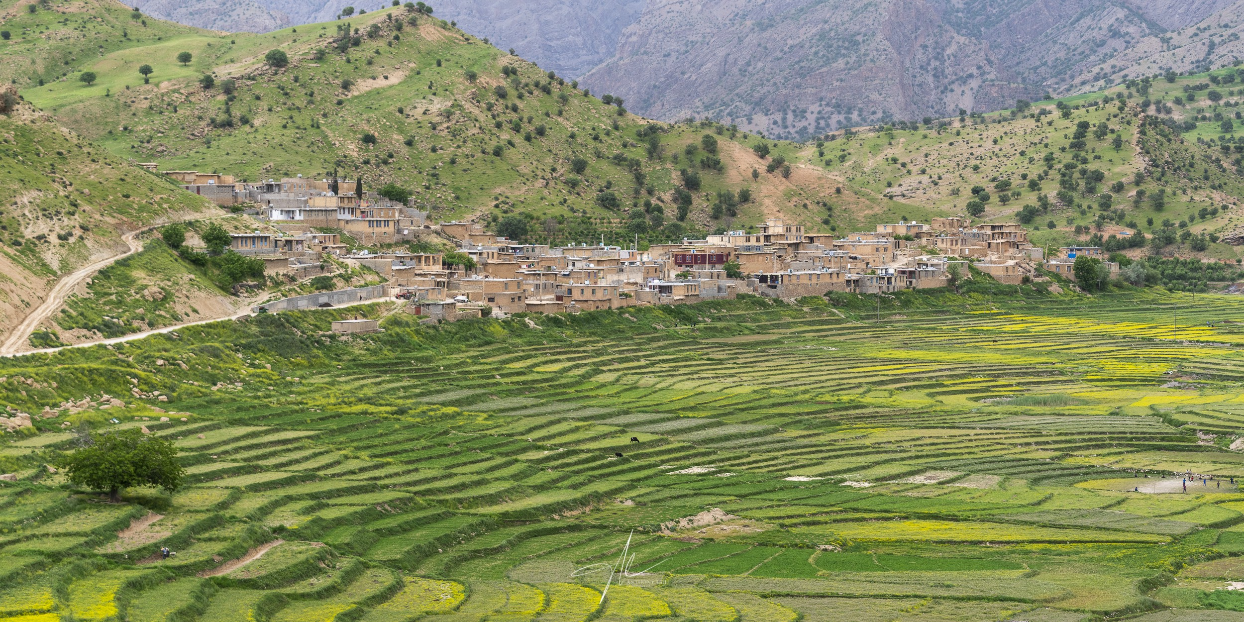 A quiet Iranian settlement located besides a huge terraced rice field valley in the Zagros Mountains.