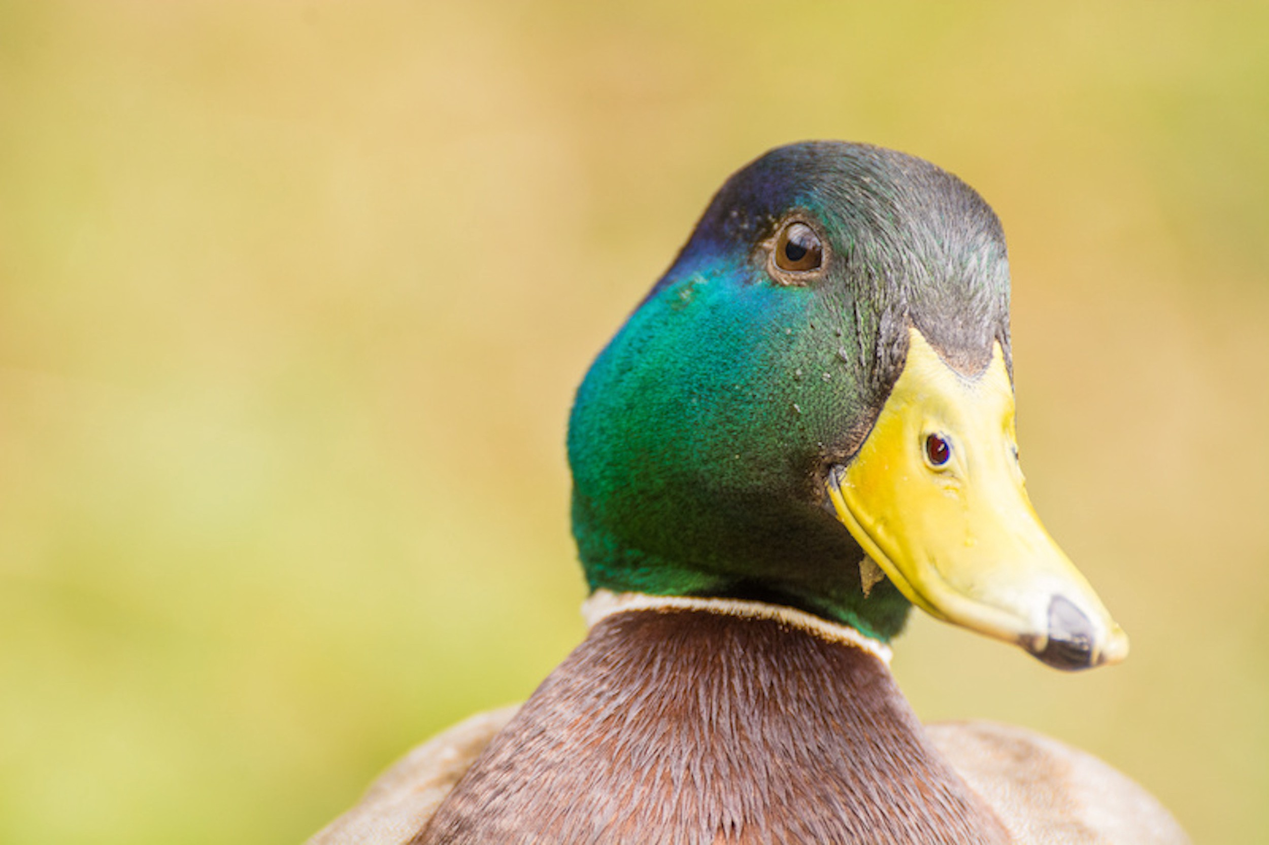 Picture of a duck. The Duck Test does work on passive aggressive behaviour.