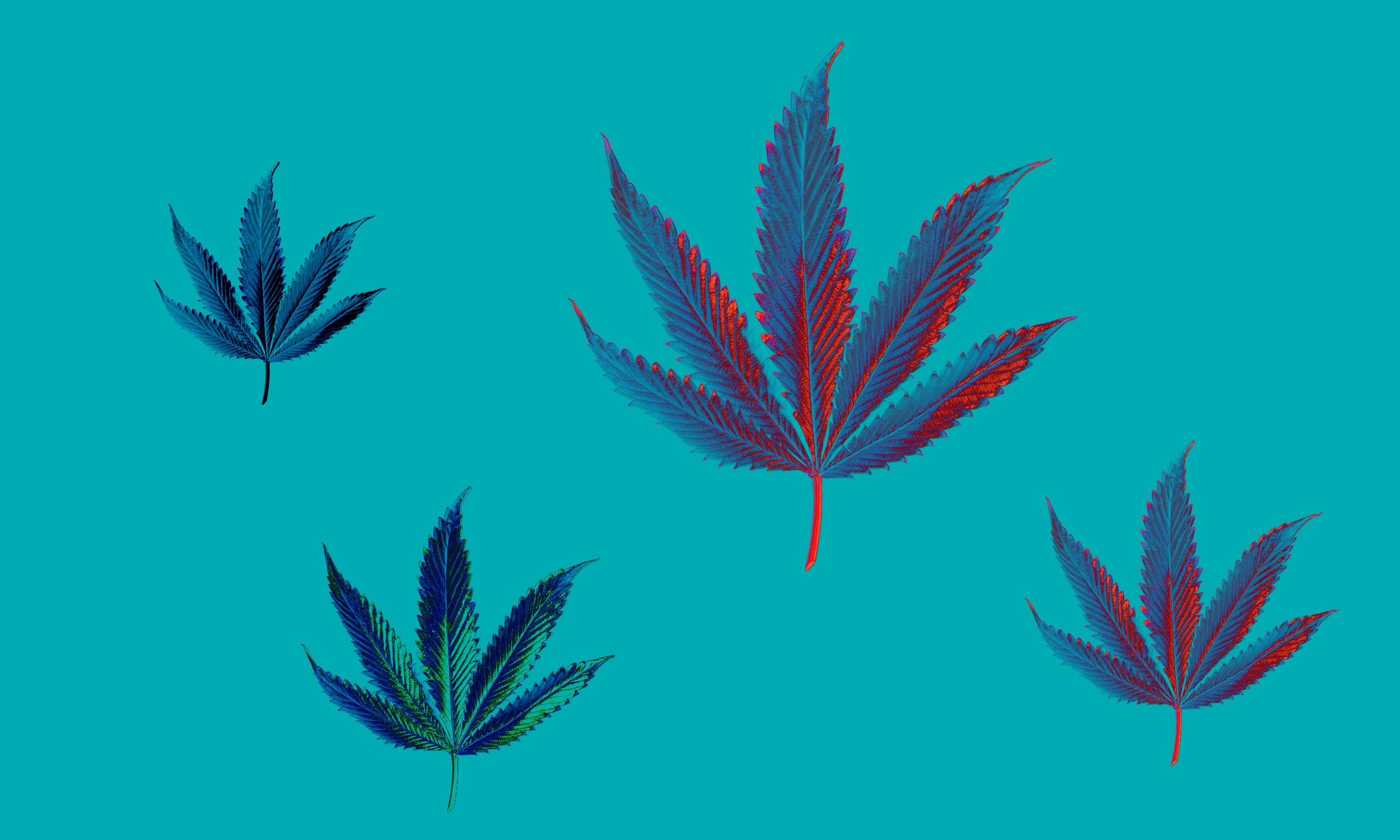 Cannabis leafs vectors on a blue background.