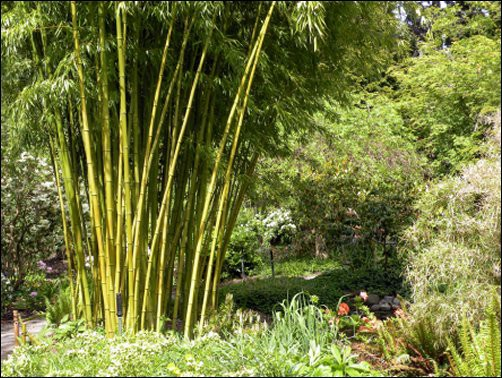 Best Of Bamboo Bamboo Projects For Your Home And Garden
