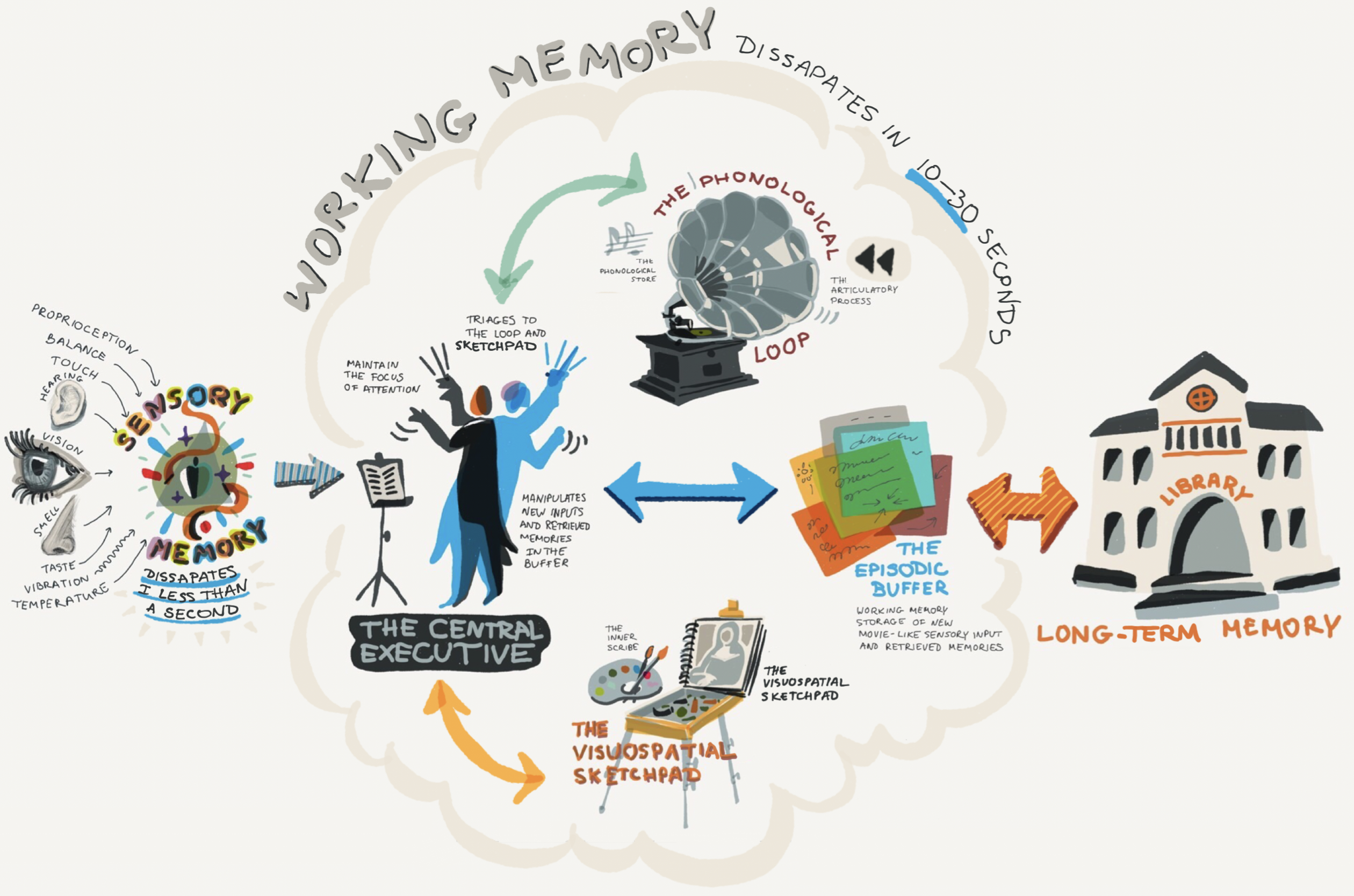 Illustration of The Working Memory Model and how it fits within how memory works.