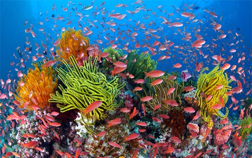 Image result for great barrier reef colourful coral""