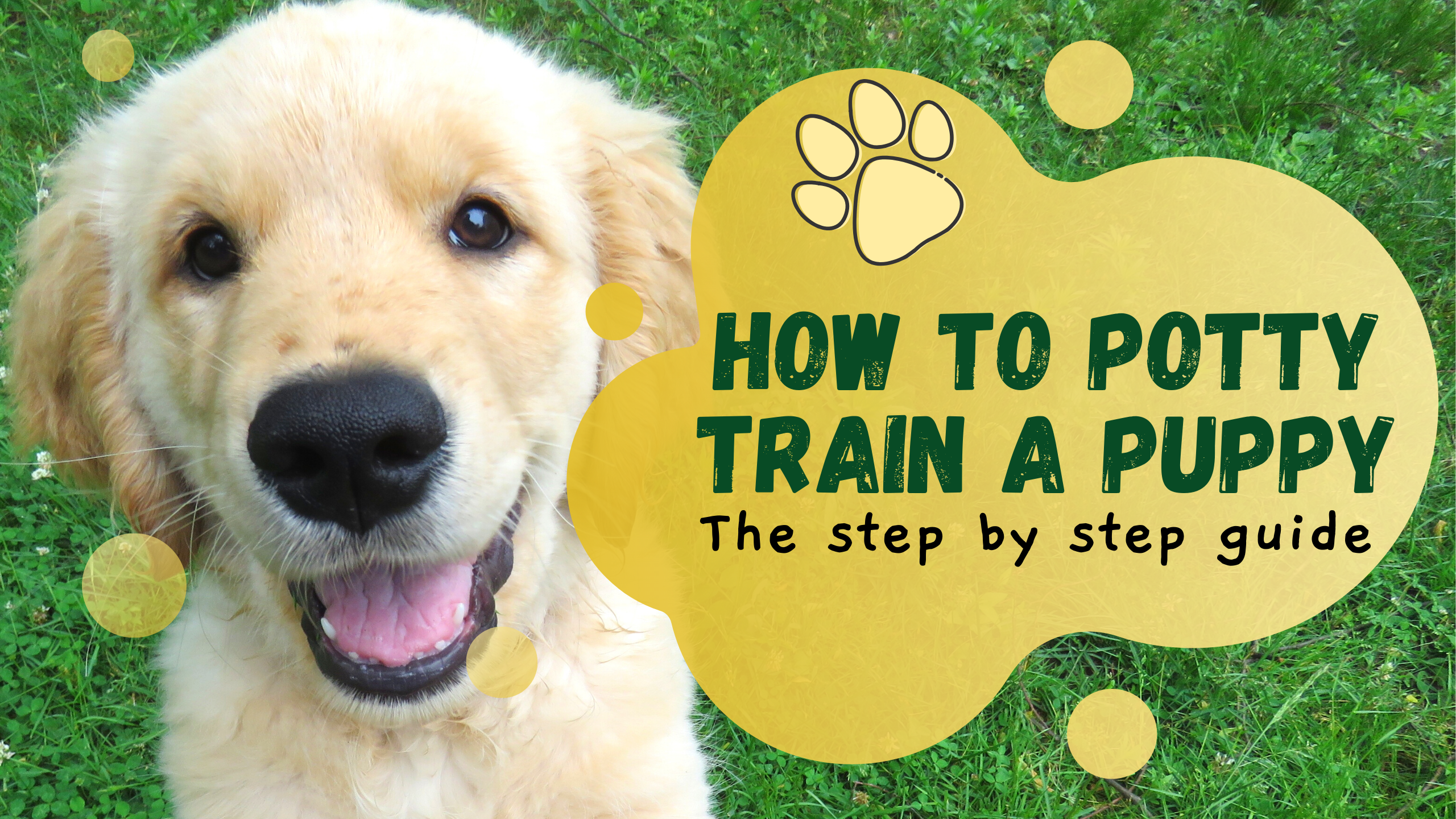 The Only Guide You Need For Potty Training Your New Puppy By Pawcessorize Pet Supplies Online Medium