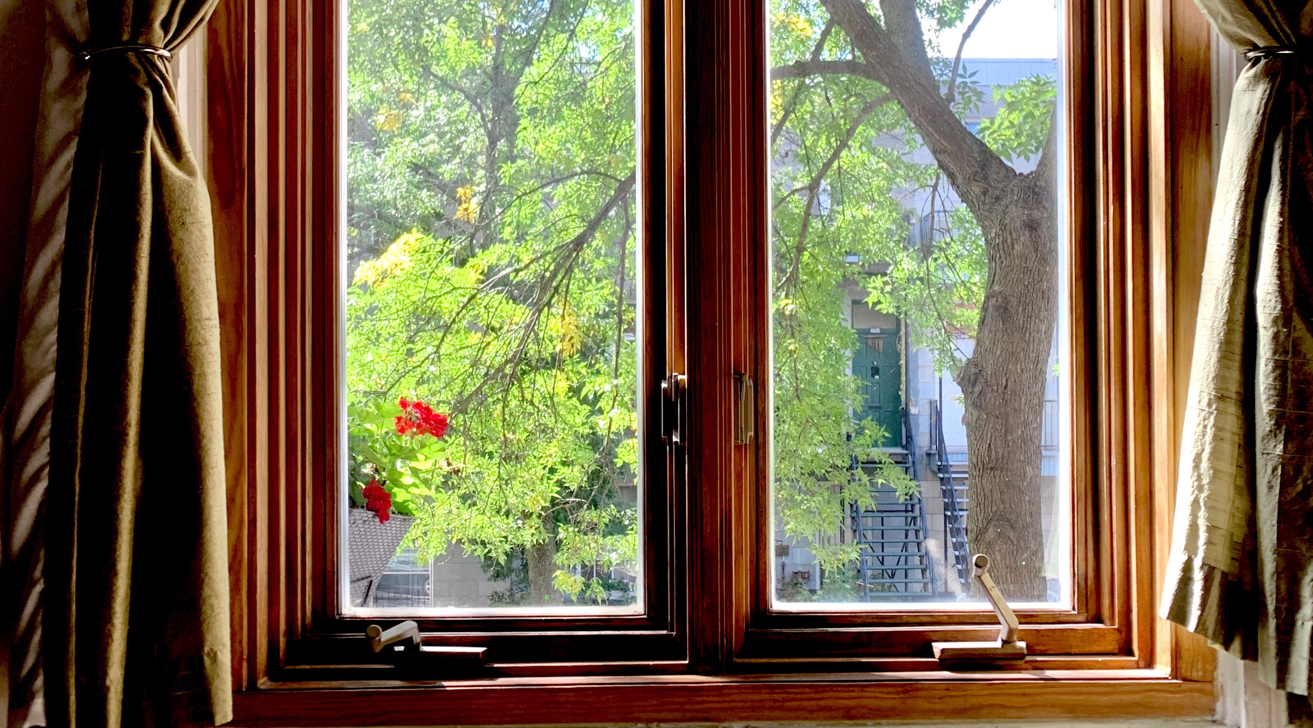 looking through the window to the trees outside
