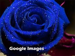 A blue rose with water droplets on the blossom