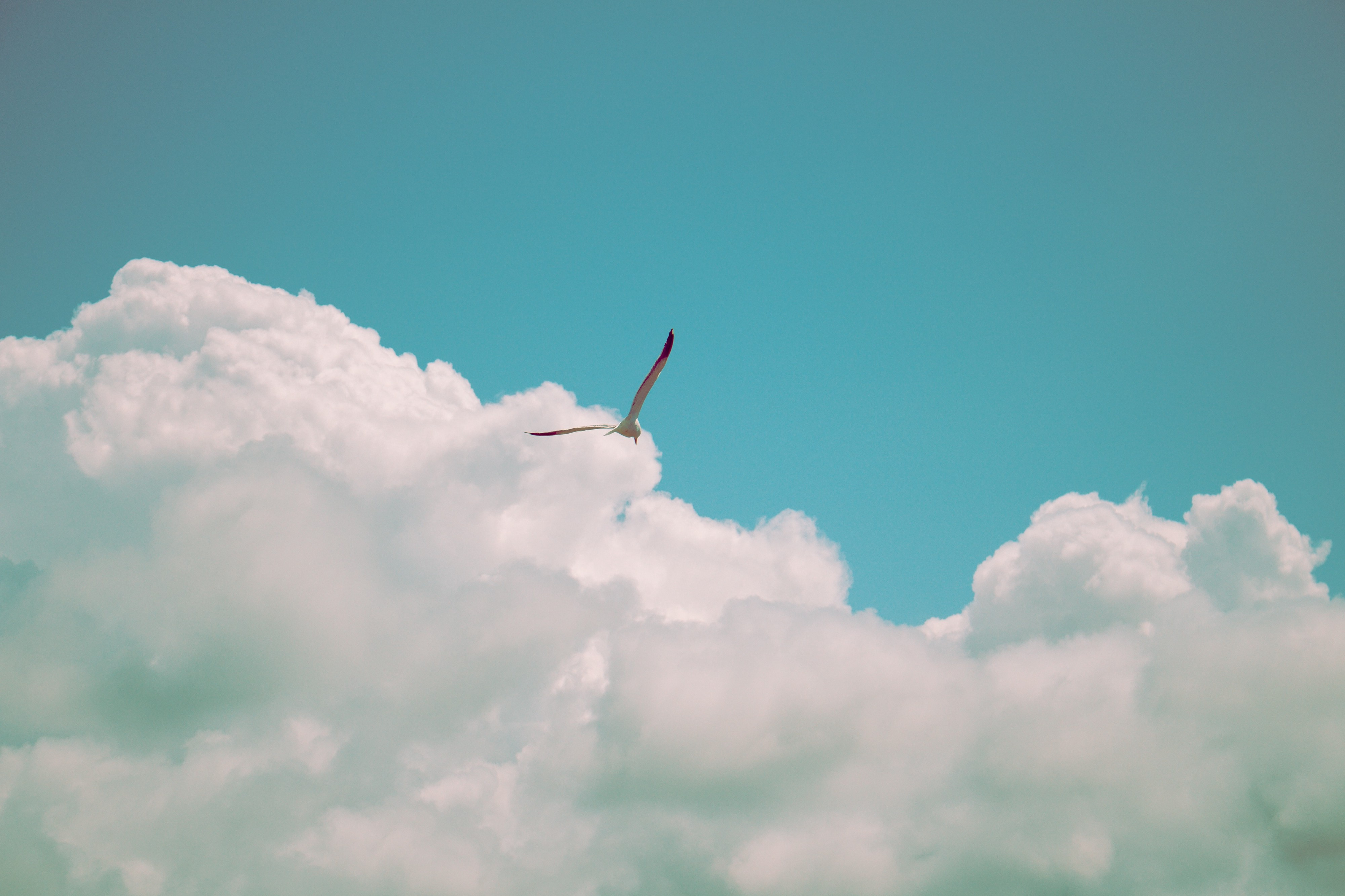Bird soaring in the sky among the clouds depicting freedom and success by selling a business