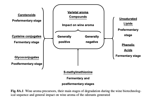 A diagram of wine aroma precursors and their positive or negative impact on wine aromas.