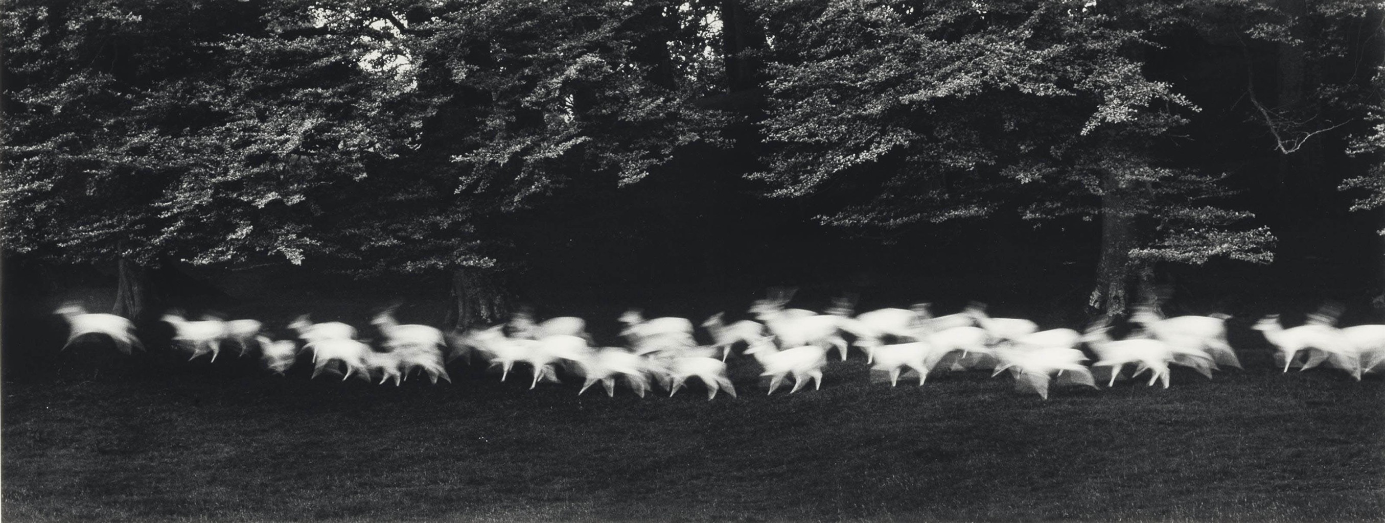 """Amy Miller Photography paul caponigro's """"running white deer, county wicklow"""