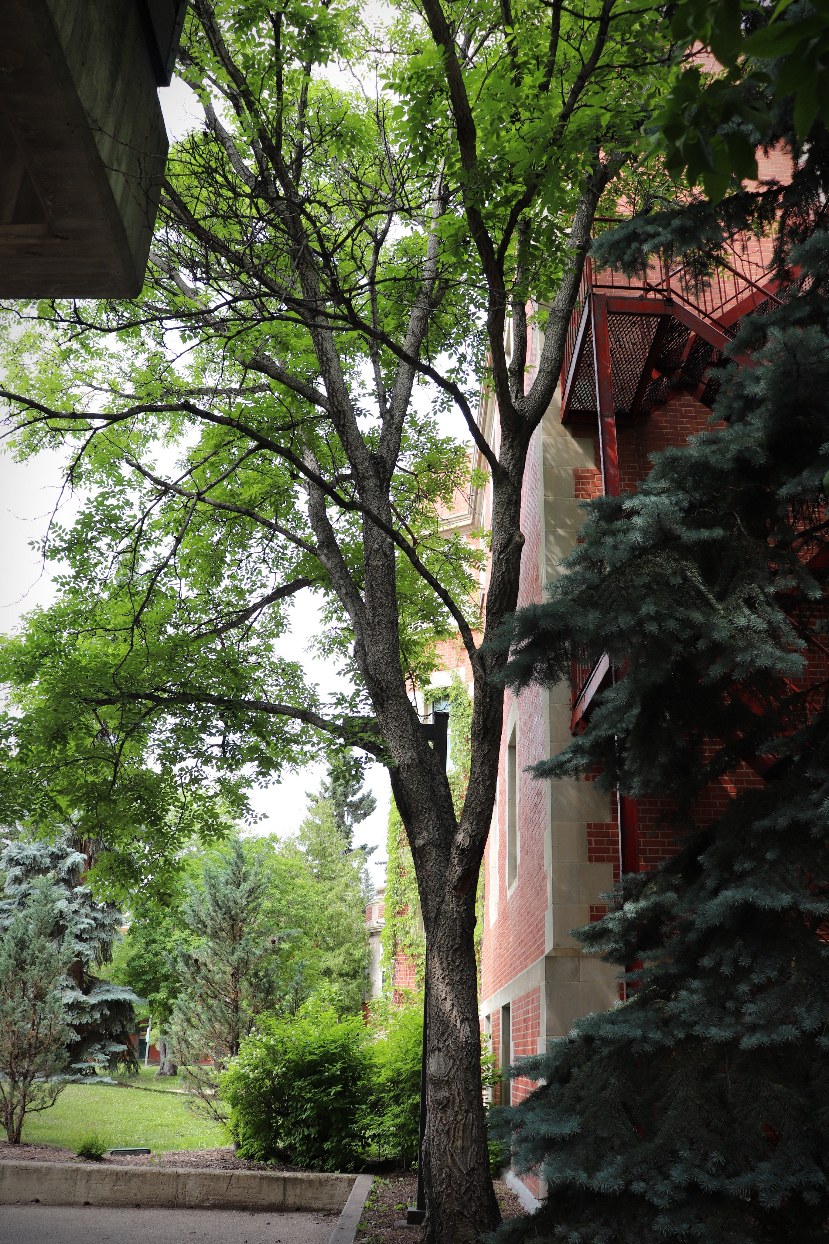 Fantastic Trees and Where to Find Them - The Quad @ UAlberta