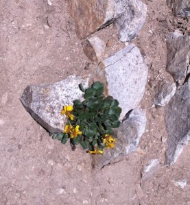 Flowers growing against the adversity of rocks
