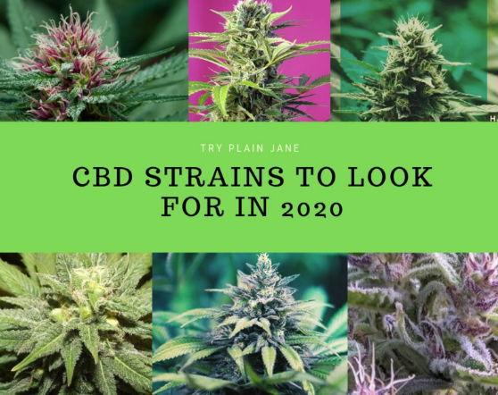 Best Strains 2020 CBD strain to look in for 2020   Diana Morales   Medium