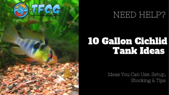 Cichlids For 10 Gallon Tanks In This Article We Ll Show You Show By Kyle Mcfarlane Medium