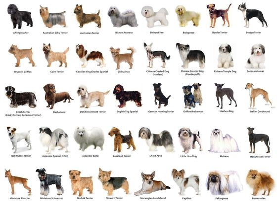 Dog Breed Clification Using Transfer