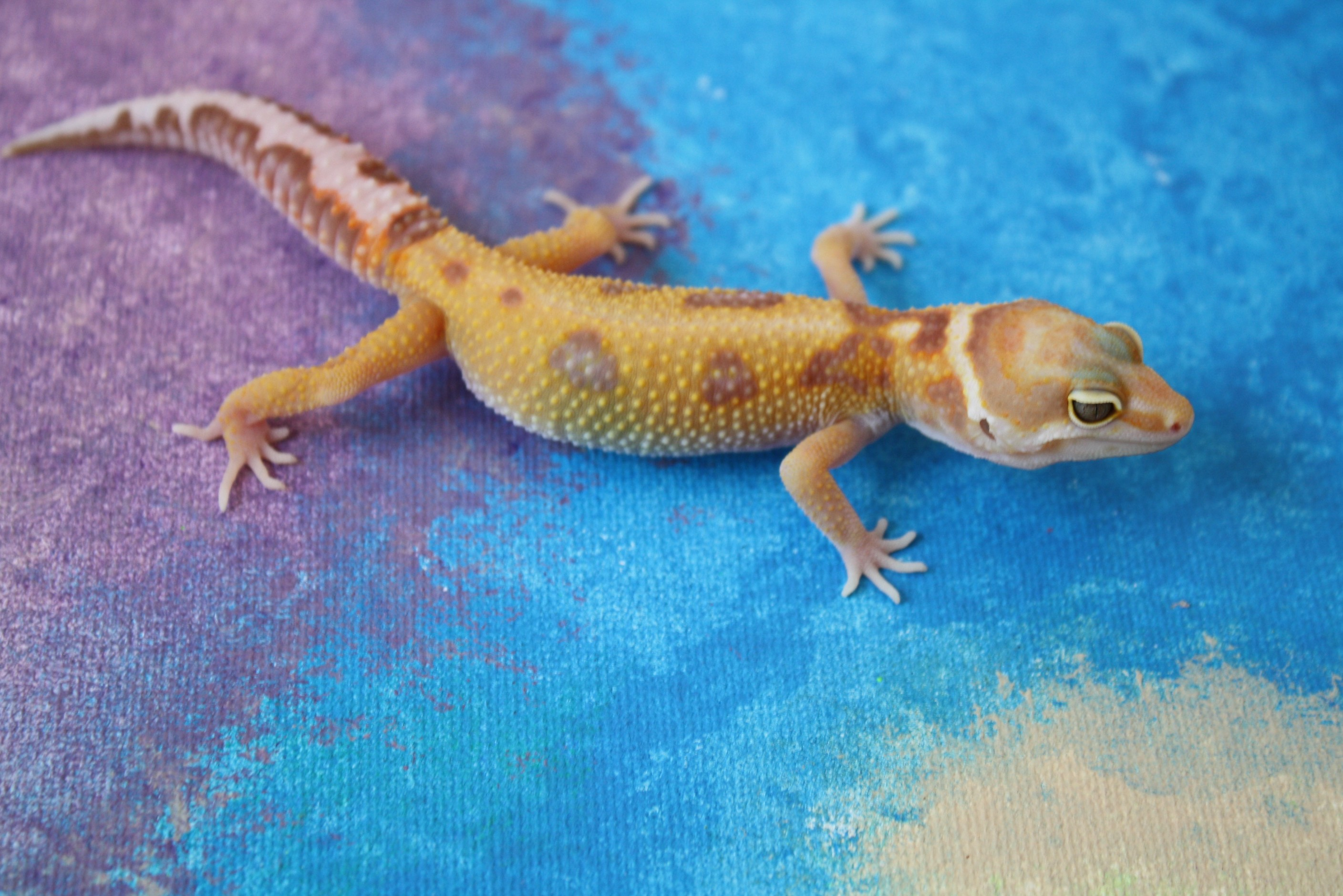 The 5 Best Beginner Reptiles So You Want A Pet Reptile But You Re By Hunter Byrd Medium