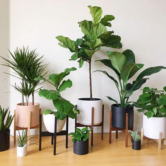 Plants Inside Rooms: 5 Indoor Plants According To Your Lifestyle