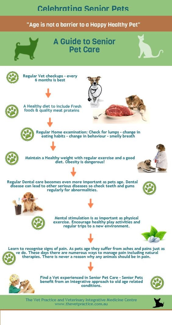 A Guide For Pet Care Pet Care For Dogs Here We Provide You By Chen Dhan Medium