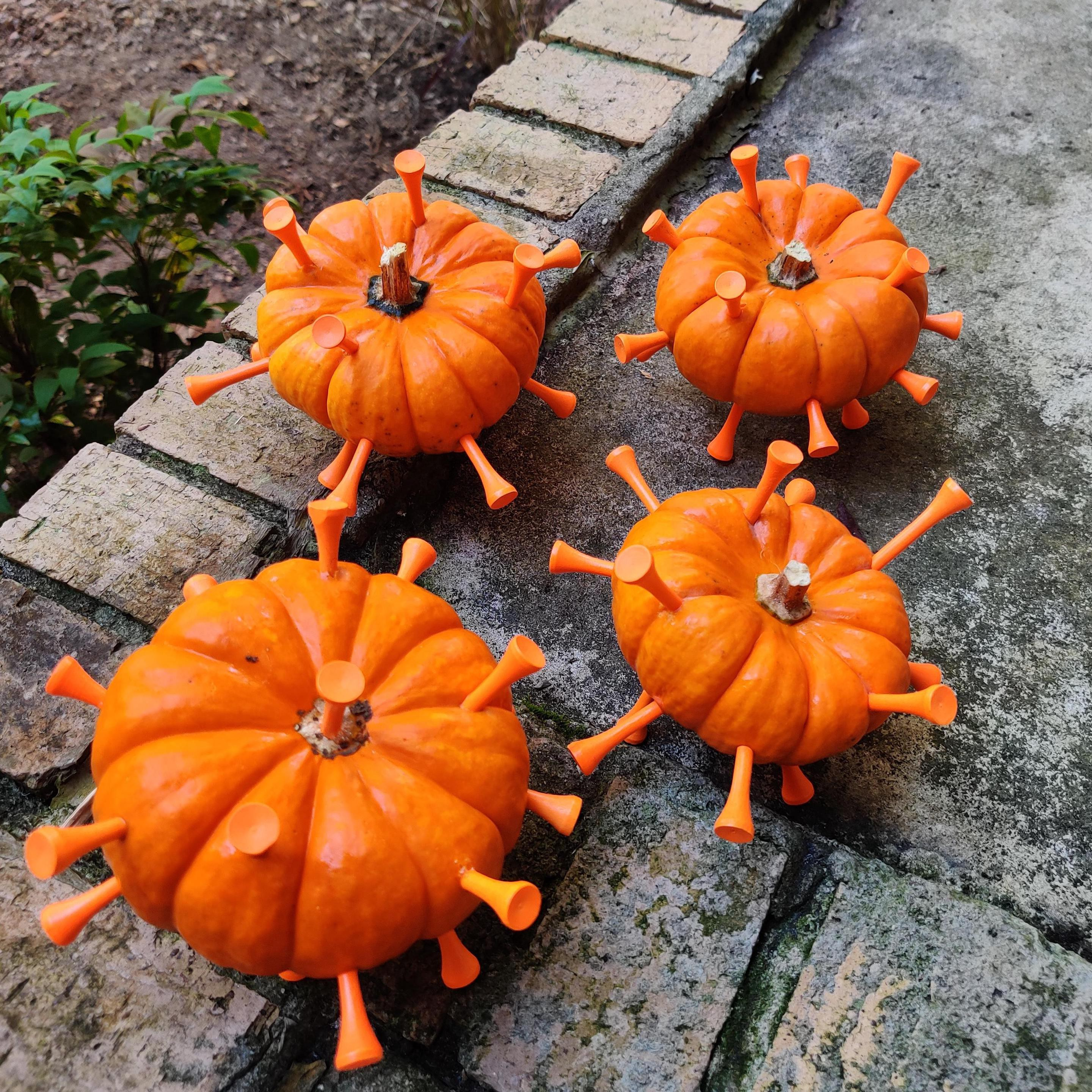 Four baby pumpkins with many matching orange golf tees sticking out of them, made to resemble spiked Coronavirus COVID19.