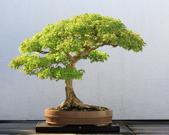 Bonsai Nation Will Singapore Matter When China Becomes No 1 By B T China S Foreign Policy Intentions Toward South East Asia Medium