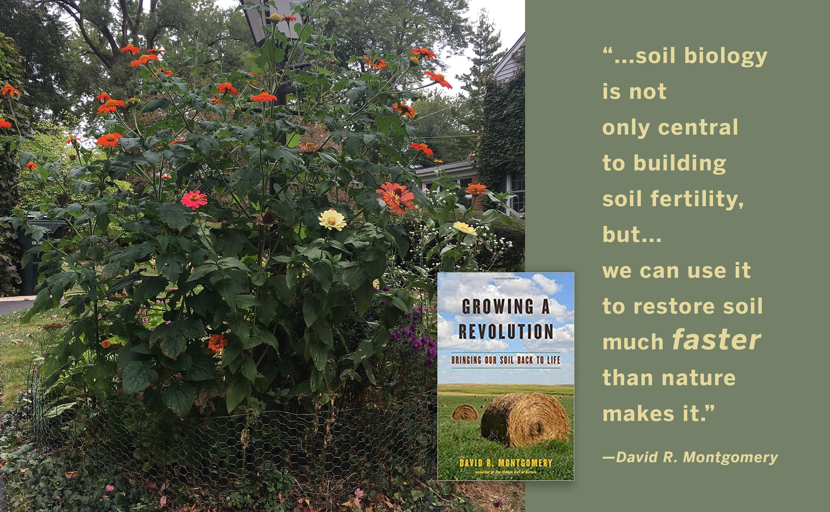 Lessons Of The Lamp Post Garden How A Healthy Soil