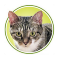 Circular image of a brown tabby with a white bib.