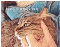Closeup of a brown tabby being petted. Text: #CatLife @WayOfCats