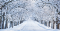 Winter wellness - a snow covered road to somewhere, white trees each side, forming a tunnel