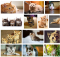 A collage of cat photos