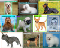 A simple Dog Breed Classifier! Can recognize 10 different breeds of dogs!